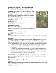 Forest Activity:  Forest Layers (Grades 1-6) Lesson Plan