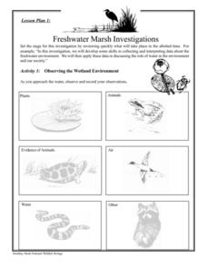 Freshwater Marsh Investigations Lesson Plan