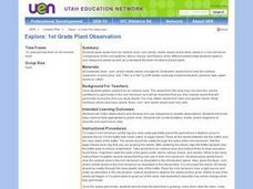 Explore: 1st Grade Plant Observation Lesson Plan