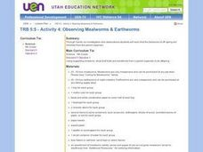 Observing Mealworms & Earthworms Lesson Plan