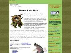 Name That Bird Lesson Plan