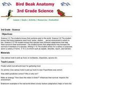 Bird Beak Anatomy Lesson Plan