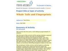 Whale Tails and Fingerprints Lesson Plan