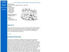 Marine & Aquatic Habitats Activities - Tidal Pools Lesson Plan