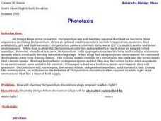 Phototaxis Lesson Plan