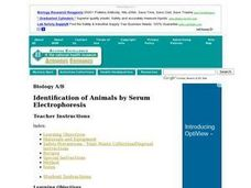 Identification of Animals by Serum Electrophoresis Lesson Plan