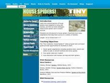 House Spiders Lesson Plan