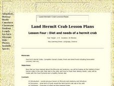 Diet and Needs of a Hermit Crab Lesson Plan