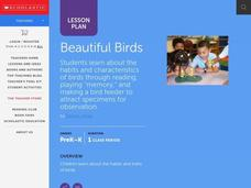 Beautiful Birds Lesson Plan