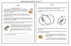 Bees Worksheet