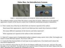 Identification of Burrow Types And Species Counts: False Bay Lesson Plan