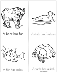 Fur, Features, Scales, and Shells Book Printables & Template