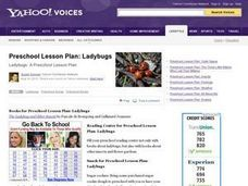Ladybugs Lesson Plan