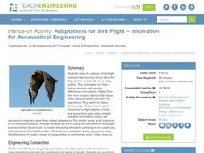 Adapatations for Bird Flight - Inspiration for Aeronautical Engineering Activities & Project