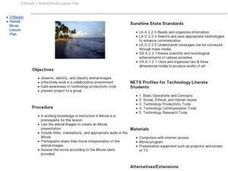 Beach Project Lesson Plan