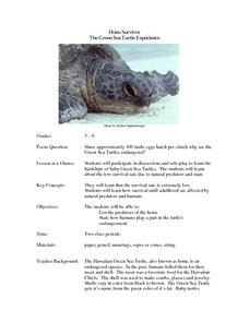 Honu Survivor The Green Sea Turtle Experience Lesson Plan