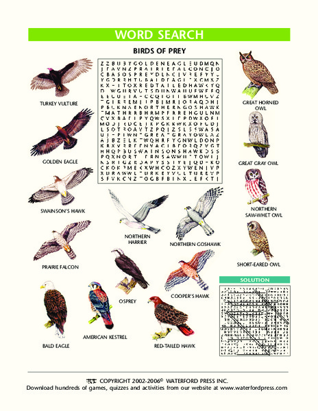 Birds of Prey Word Search Lesson Plan