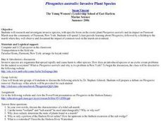 Phragmites australis: Invasive Plant Species Lesson Plan