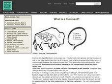 What is a Ruminant? Lesson Plan