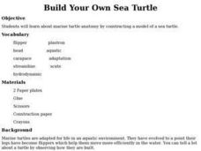 Build Your Own Sea Turtle Lesson Plan