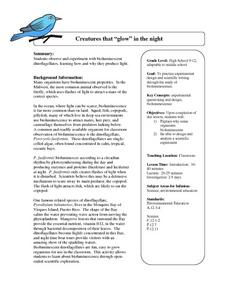 Creatures That Glow In The Night Lesson Plan