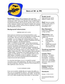 Bats Of WI And PR Lesson Plan