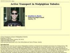 Active Transport in Malpighian Tubules Lesson Plan