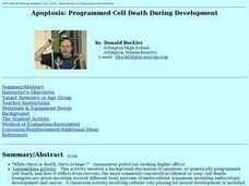 Apoptosis: Programmed Cell Death During Development Lesson Plan