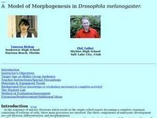 A  Model of Morphogenesis in Drosophila  Melanogaster Lesson Plan