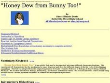 """Honey Dew from Bunny Too!"" Lesson Plan"