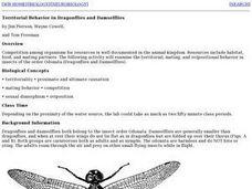 Territorial Behavior in Dragonflies and Damselflies Lesson Plan