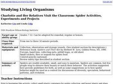 Spider Activities, Experiments and Projects Lesson Plan