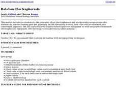 Rainbow Electrophoresis Lab Lesson Plan
