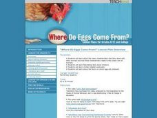 Where Do Eggs Come From? Lesson Plan