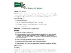 A Tree of Life Activity Lesson Plan