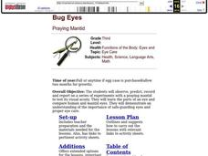 Bug Eyes Lesson Plan
