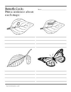 Butterfly Cycle Worksheet