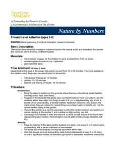 Nature By Numbers Lesson Plan