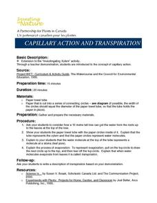 Capillary Action And Transpiration Lesson Plan