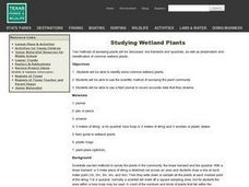 Studying Wetland Plants Lesson Plan