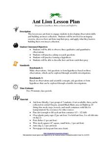 Ant Lion Lesson Plan Lesson Plan