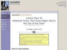 Redwood Trees: How Does Water Get to the Top of the Tree Lesson Plan