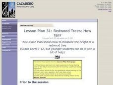 Redwood Trees: How Tall? Lesson Plan