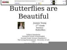 Butterflies are beautiful Lesson Plan