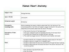 Human Heart Anatomy Lesson Plan