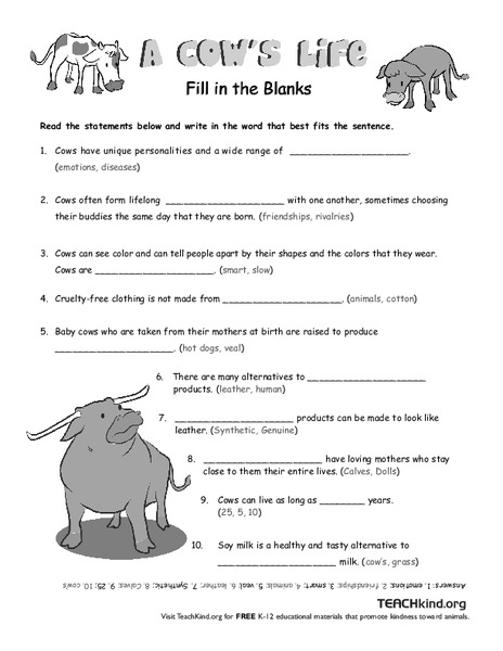 A Cow's Life Worksheet for 1st - 2nd Grade | Lesson Planet