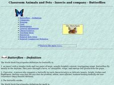 Classroom Animals & Pets - Insects & Company - Butterflies Lesson Plan