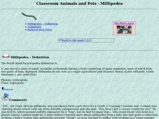 Classroom Animals and Pets - Millipedes Lesson Plan
