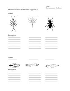 Macroinvertebrate Identification Lesson Plan