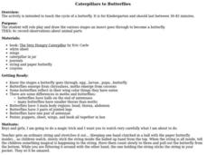 Caterpillars to Butterflies Lesson Plan